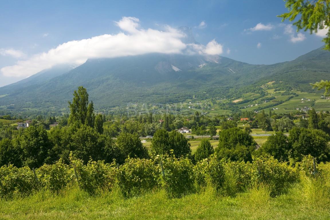 Superbe propriété viticole du XIX ième bénéficiant d'une belle vue sur la chaîne de Belledonne. picture 4