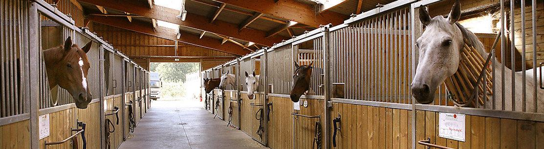 Equestrian farms Luxury real estate for sale