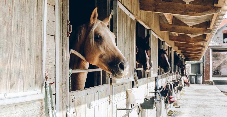 Equestrian properties & stud farms