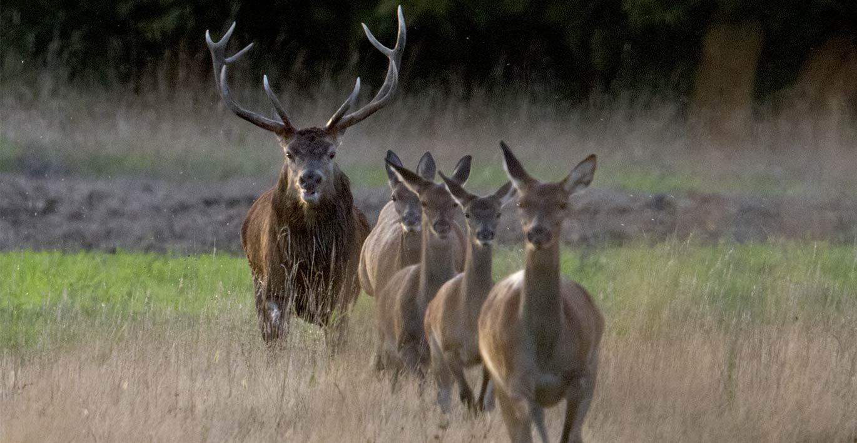 Domaines de chasse