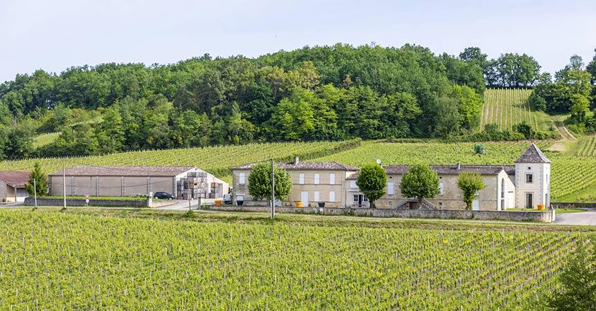 Exploitation viticole, la passion d'une vie au cœur des vignes